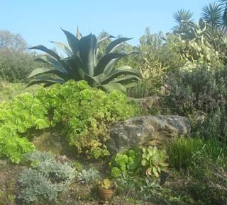Jardin La Laurisylve