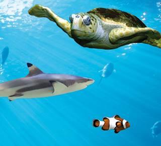 Aquarium de Vannes