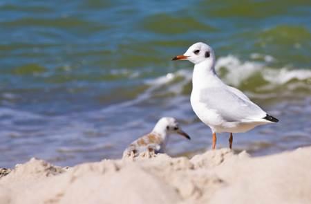 Découverte des oiseaux migrateurs du bord de mer et des landes  avec l'ASPKerbihan